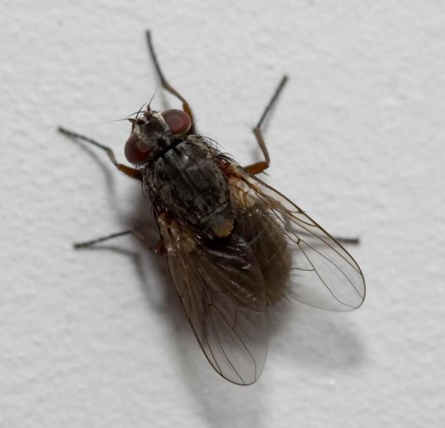 fly-on-the-wall13.jpg